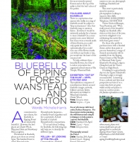 April 2012 – Bluebells of Epping Forest